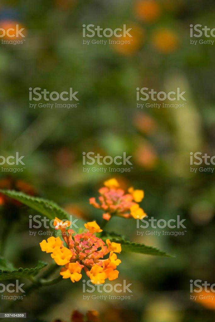 Yellow wild flower stock photo