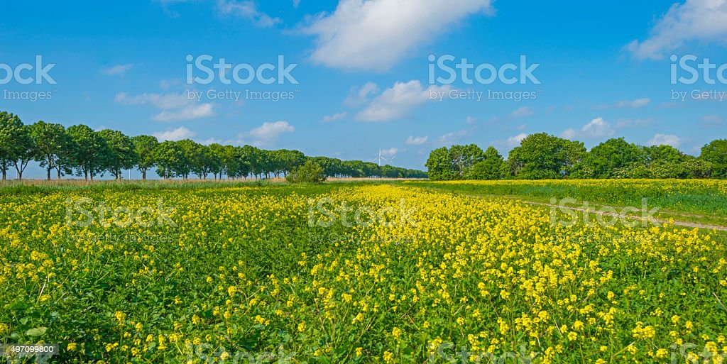 Yellow wild flowers growing on a sunny field in spring stock photo