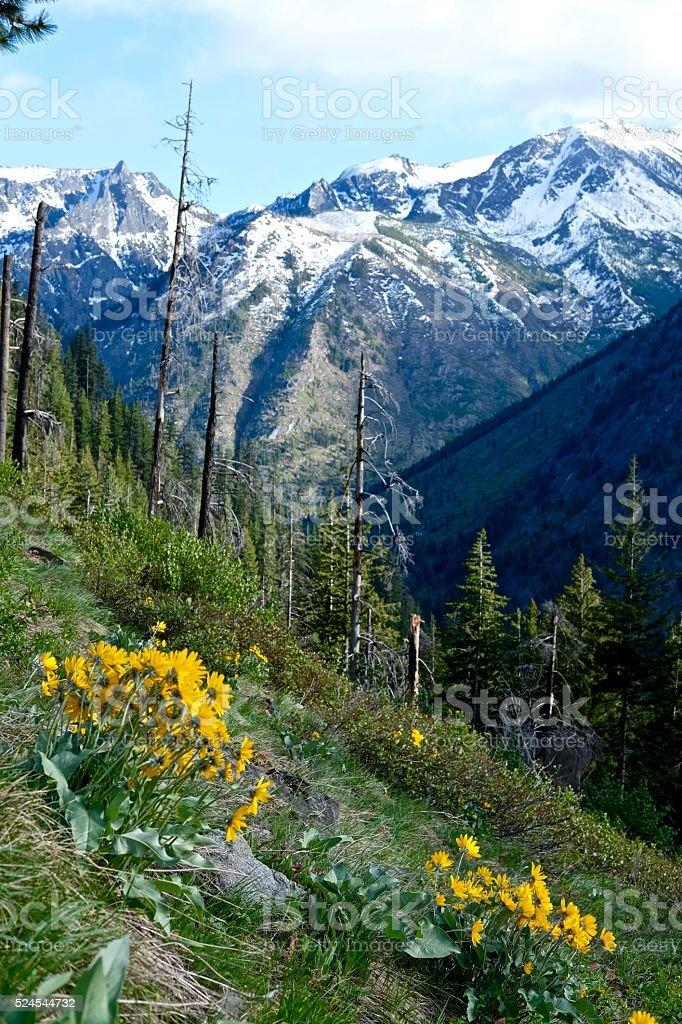 Yellow Wild Flowers, Mountains and Snow. stock photo
