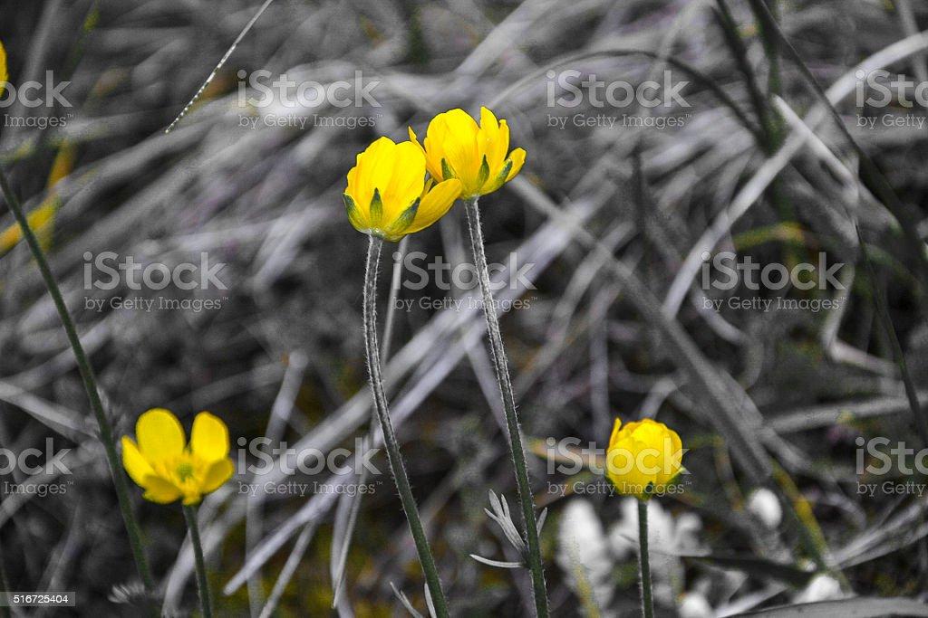 Yellow wildflowers stock photo