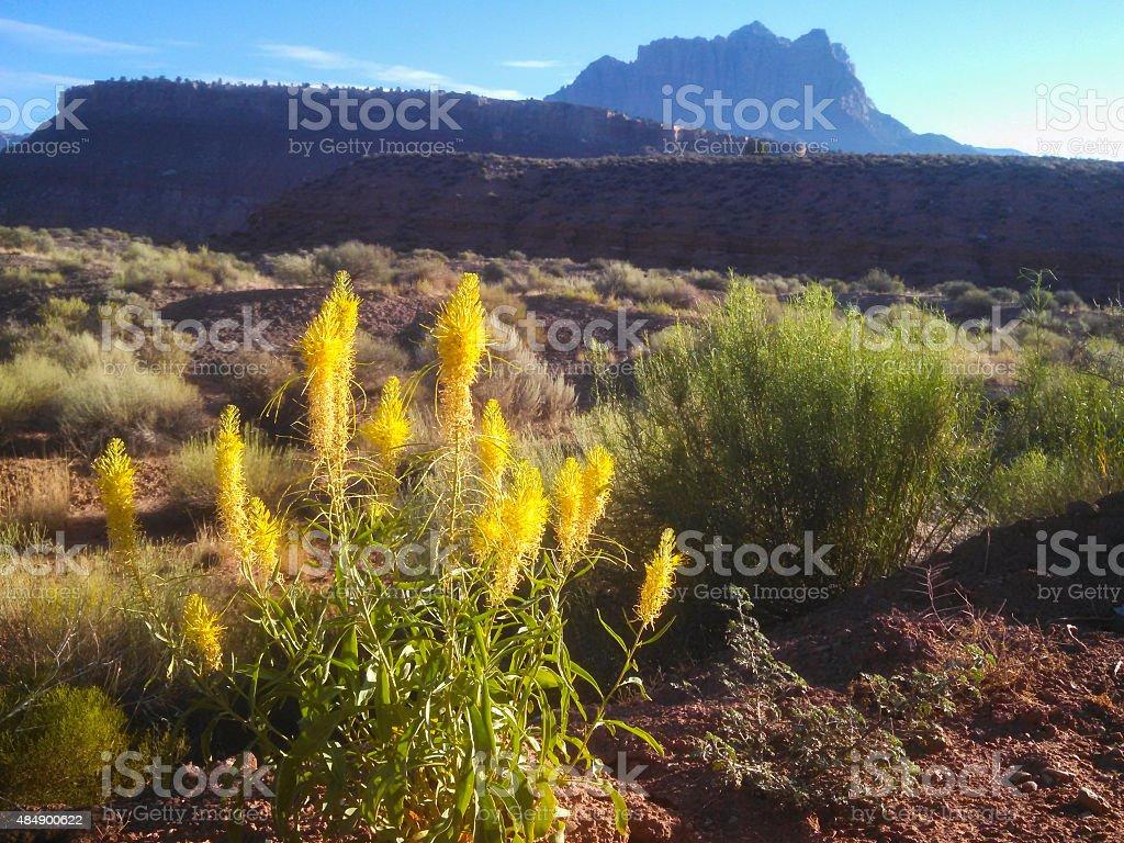 Yellow wildflowers sagebrush desert Mount Kinesava Zion National Park Utah stock photo