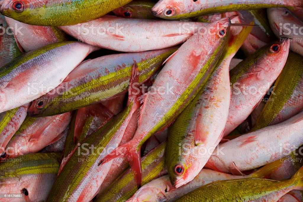 Yellowback Fusilier in fish Market. stock photo