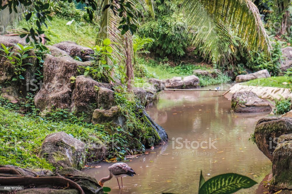 Yellow-billed stork fishing in water stock photo
