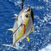 Yellowfin Tuna Catch