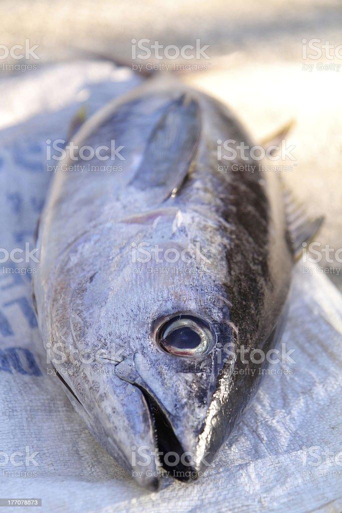 Yellowfin Tuna in Sunlight stock photo