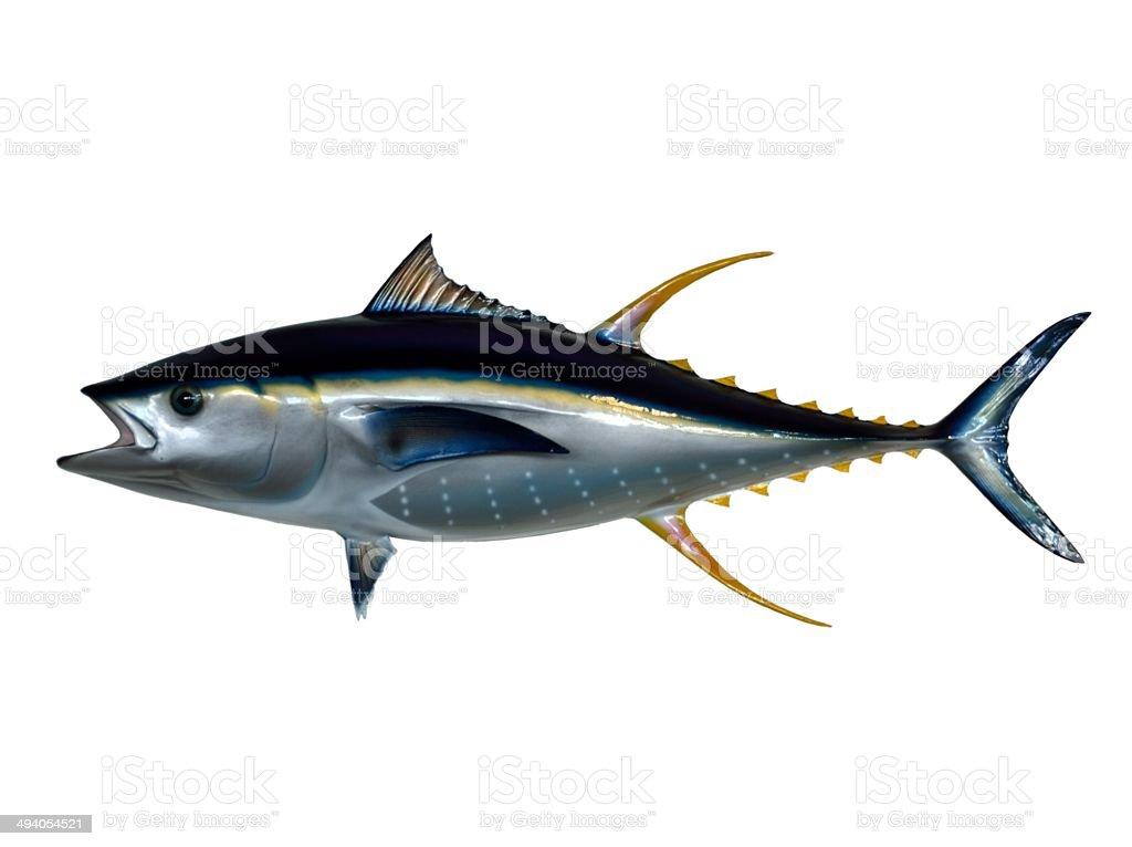 Yellowfin Tuna stock photo