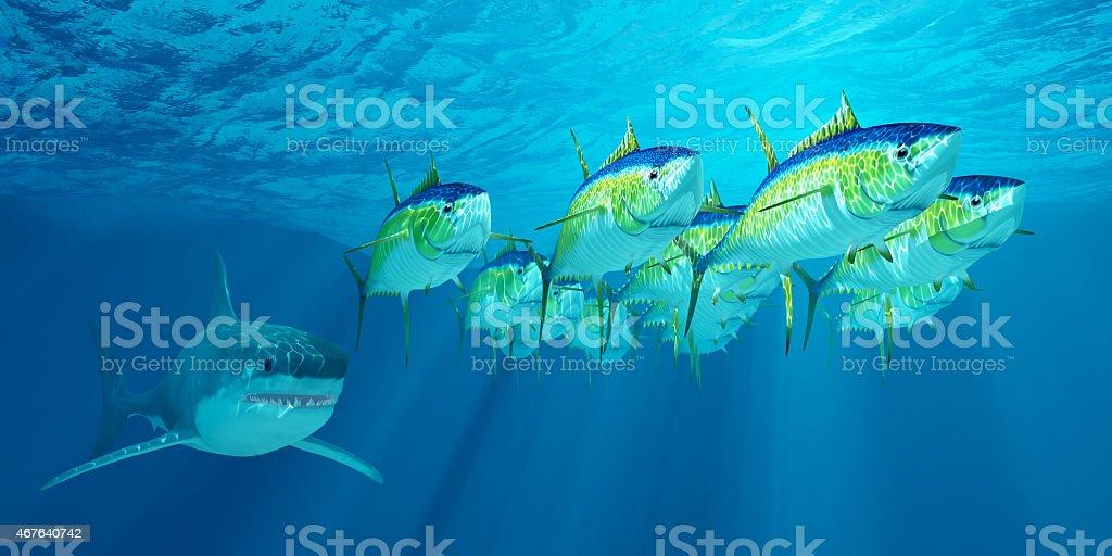 Yellowfin Tuna School stock photo