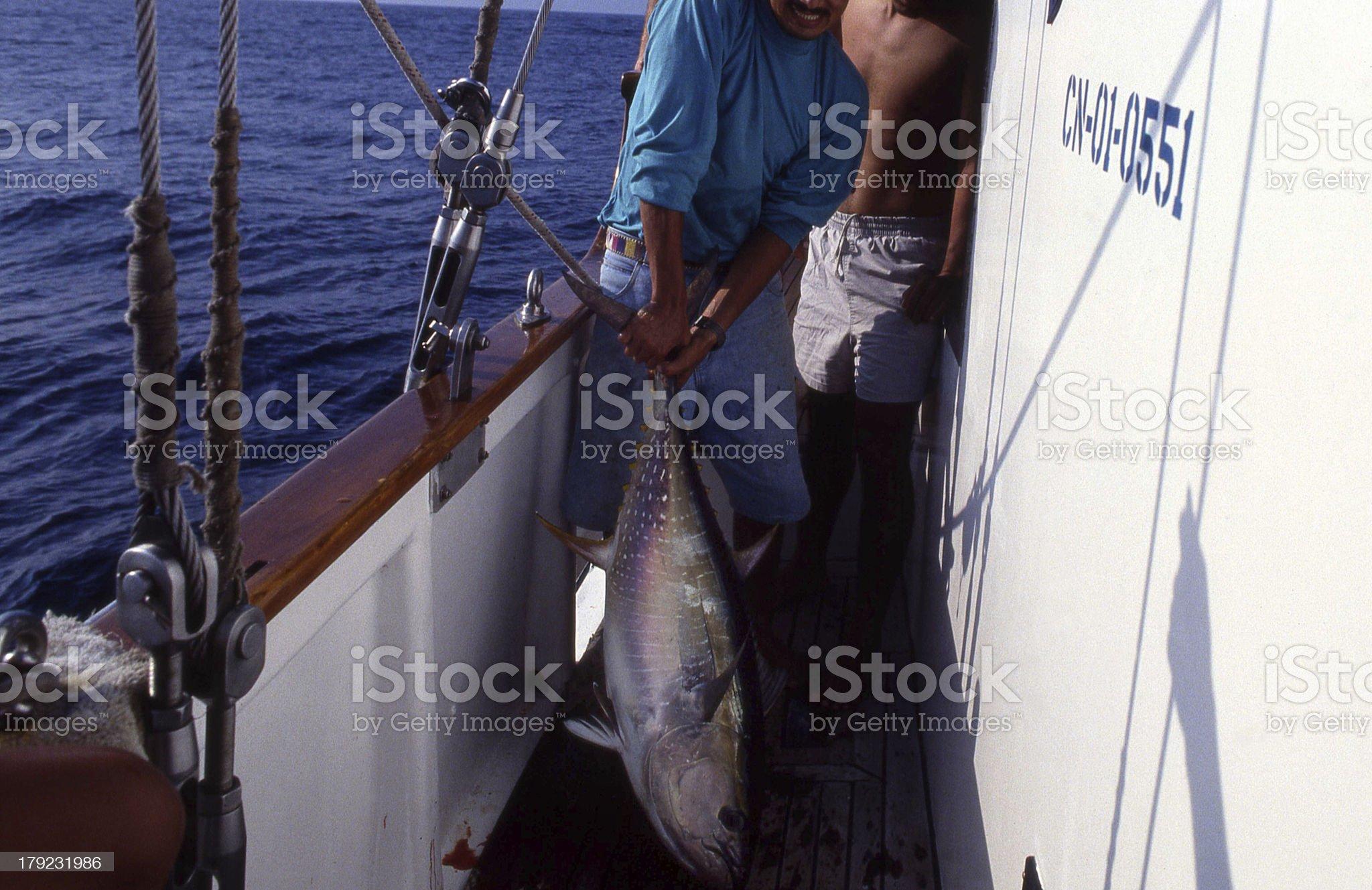 Yellowfin tuna_01 royalty-free stock photo