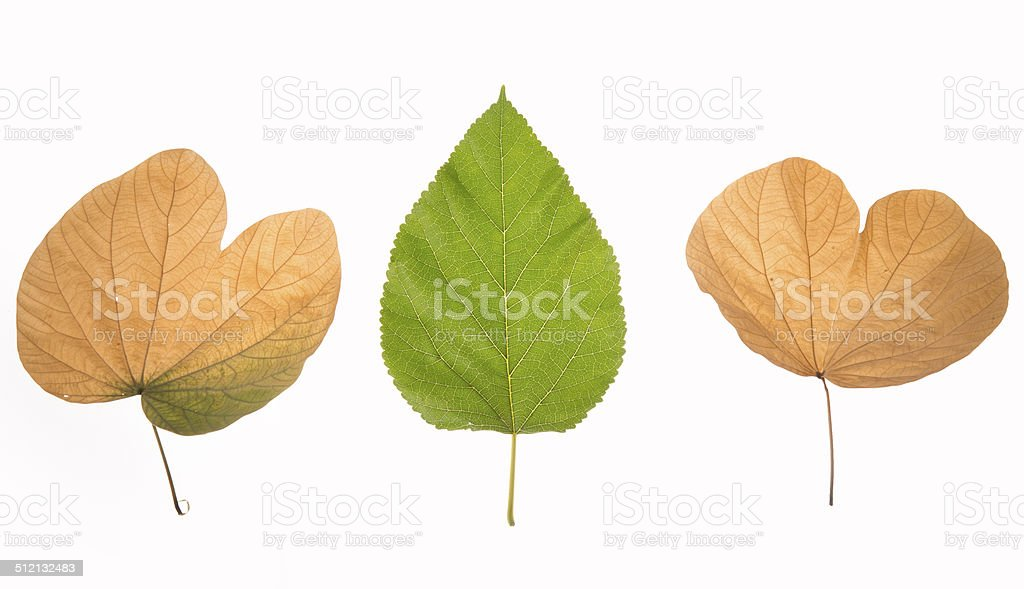 yellow-green leaves royalty-free stock photo