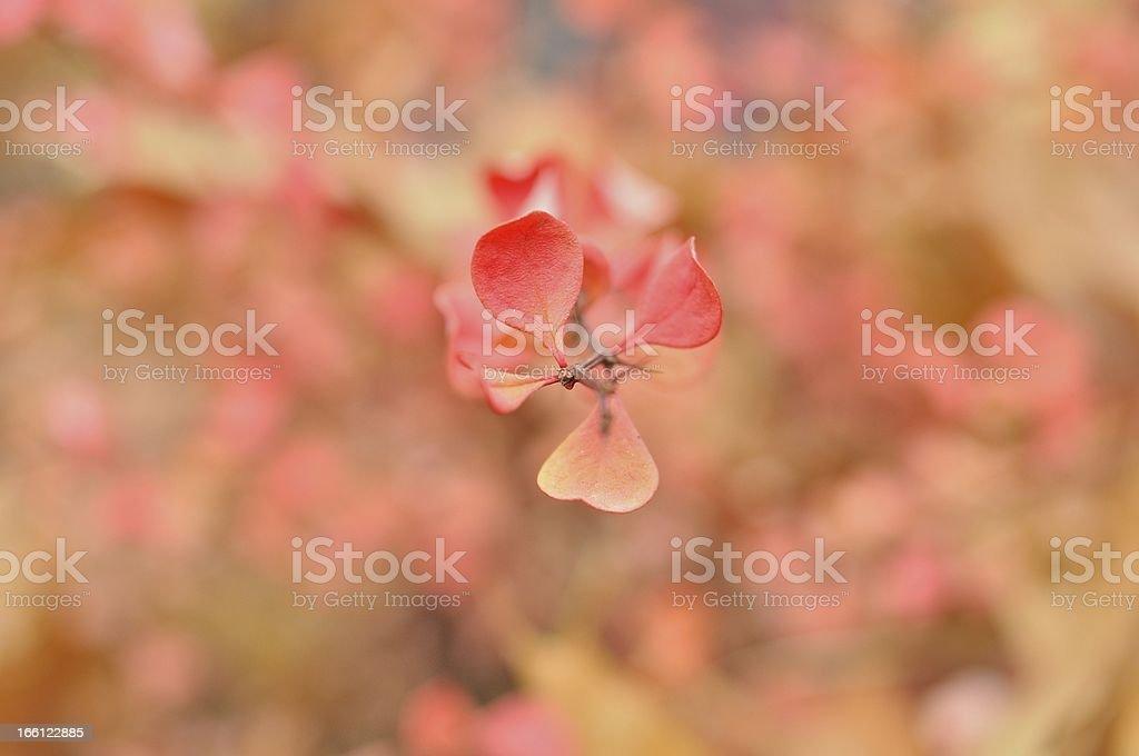 Yellow-pink  shrubs with motley artistic bokeh royalty-free stock photo