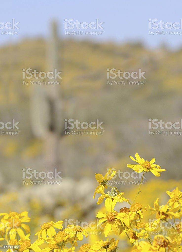 Yellows of the Desert royalty-free stock photo