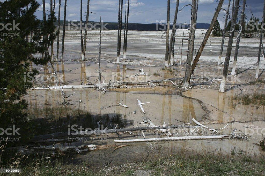 Yellowstone Bobby Sock Trees stock photo