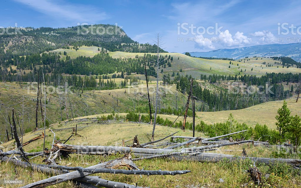 Yellowstone National Park in summer, USA. stock photo