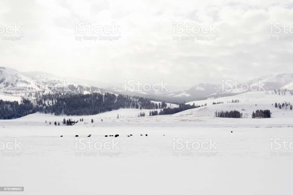 Yellowstone National Park in the Snow stock photo