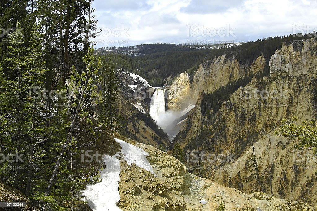 Yellowstone National Park Pine Trees Lower Falls Snowy Waterfall stock photo