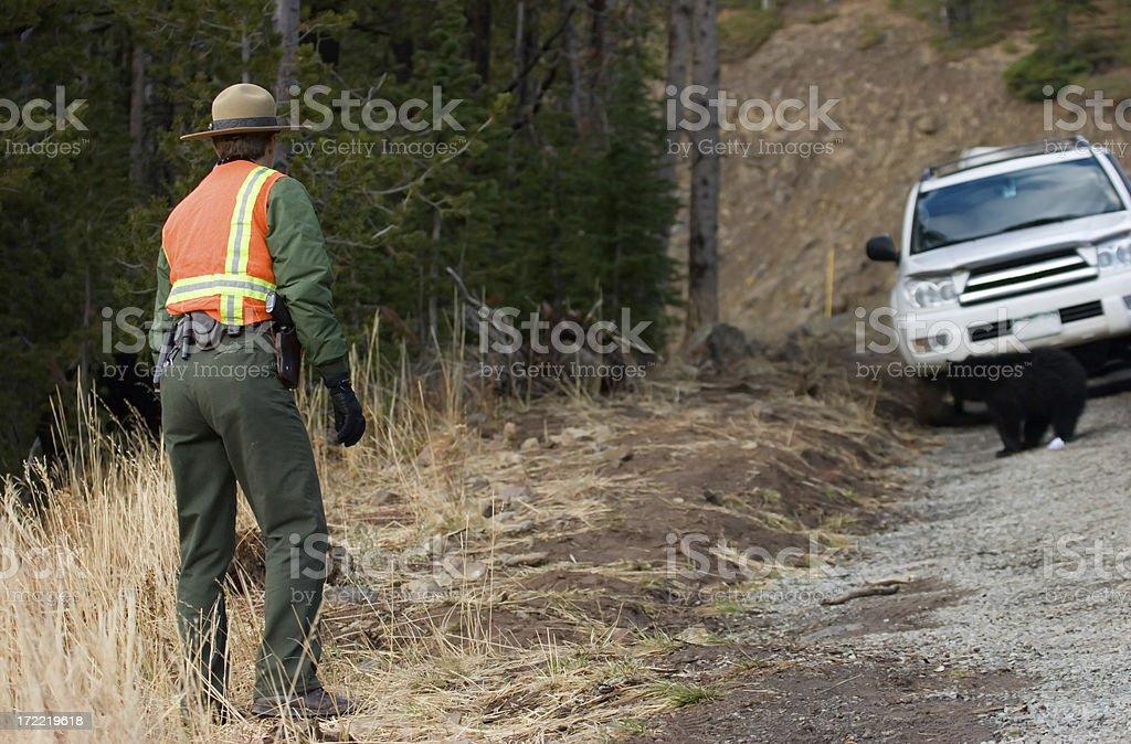 Yellowstone Ranger stock photo