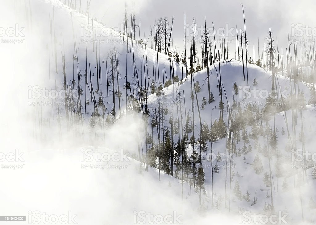 Yellowstone recovers from fire royalty-free stock photo