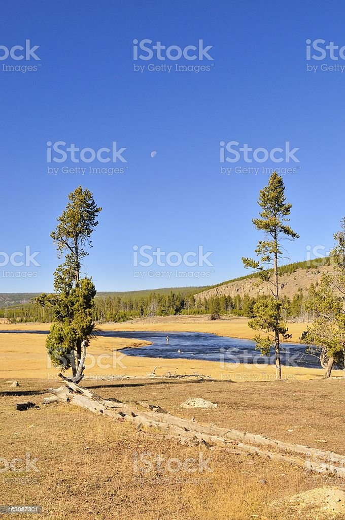 Yellowstone River Trout Fisherman Vertical royalty-free stock photo