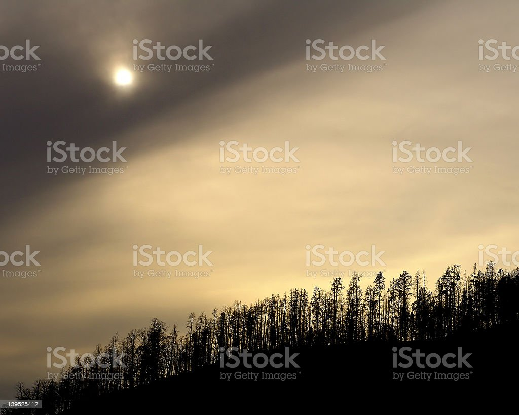 yellowstone treeline royalty-free stock photo