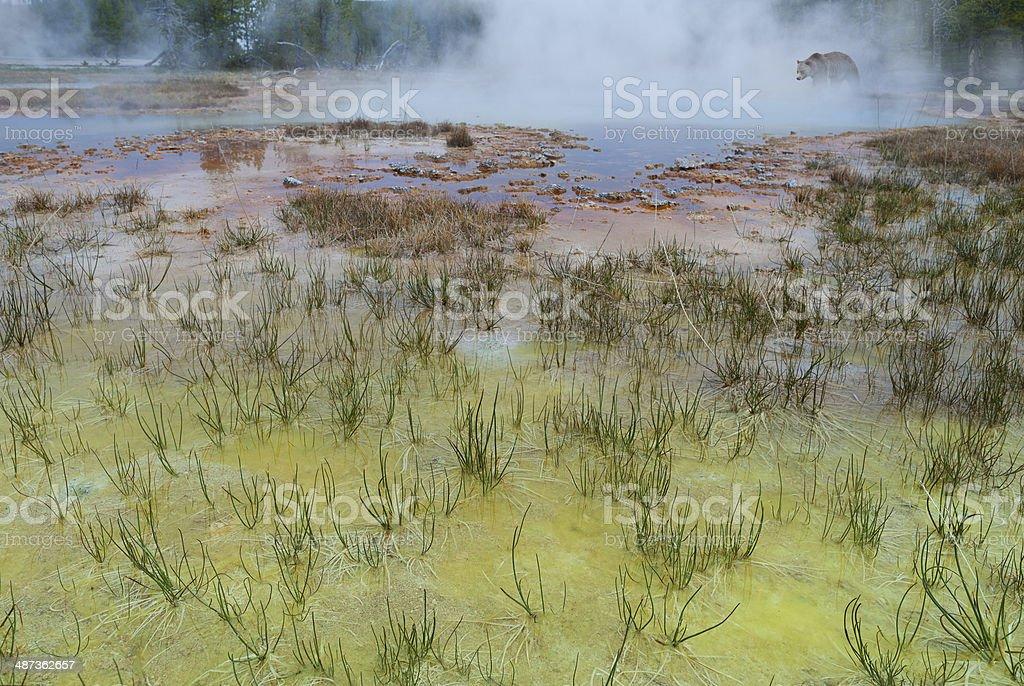 Yellowstone wild life stock photo