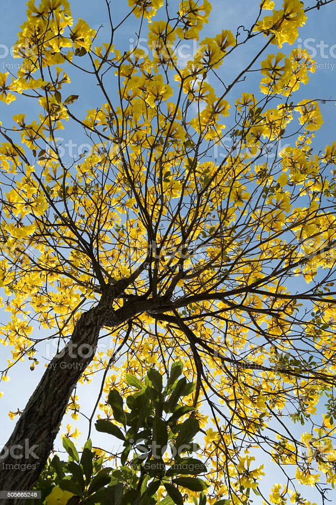 yelow flowers blooming background stock photo