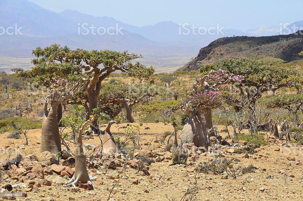 Yemen, Socotra, Homhil plateau stock photo