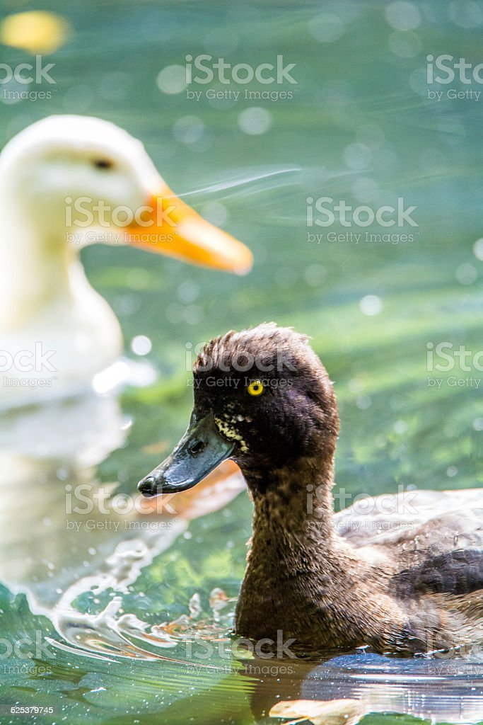 Ying und Yang stock photo