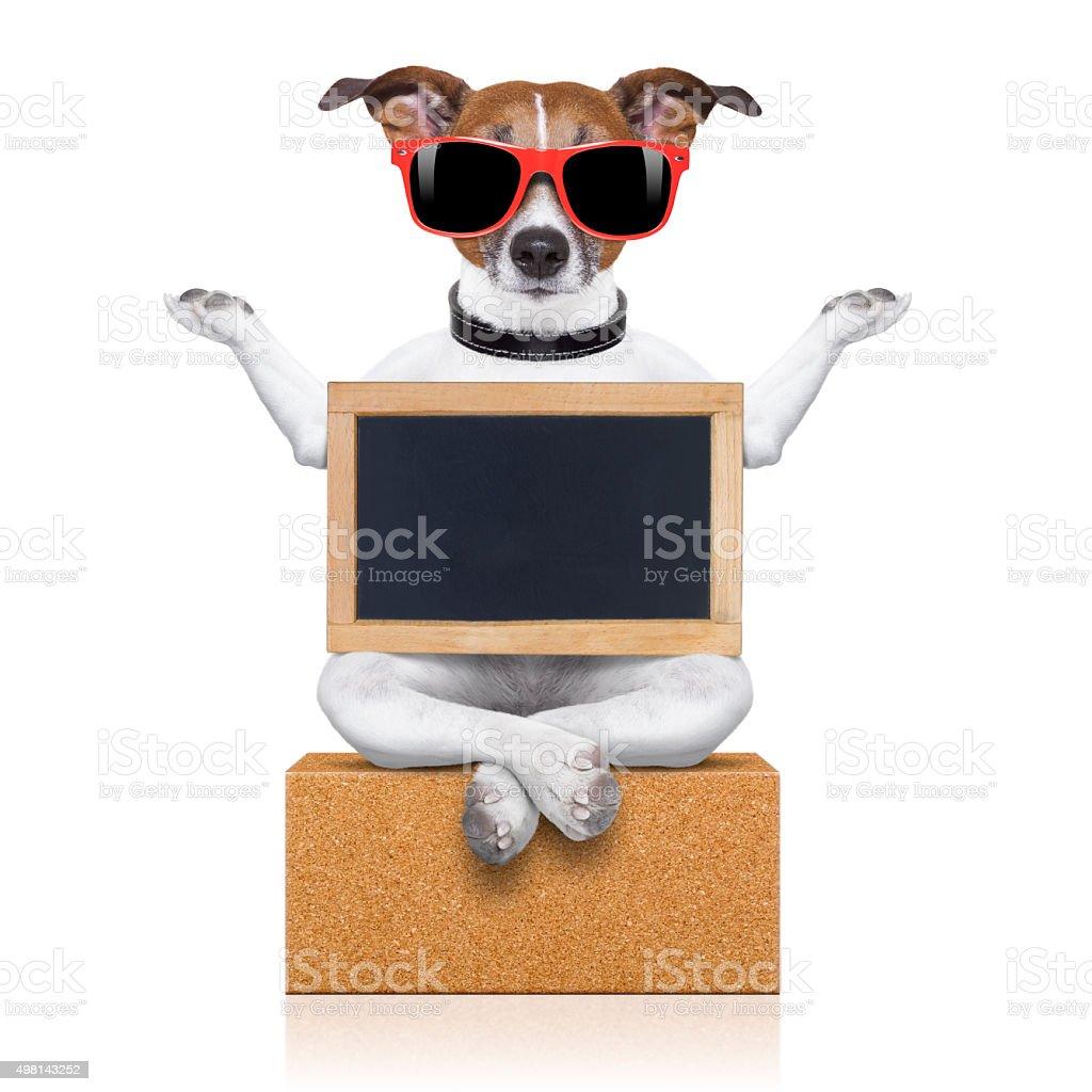 yoga dog stock photo