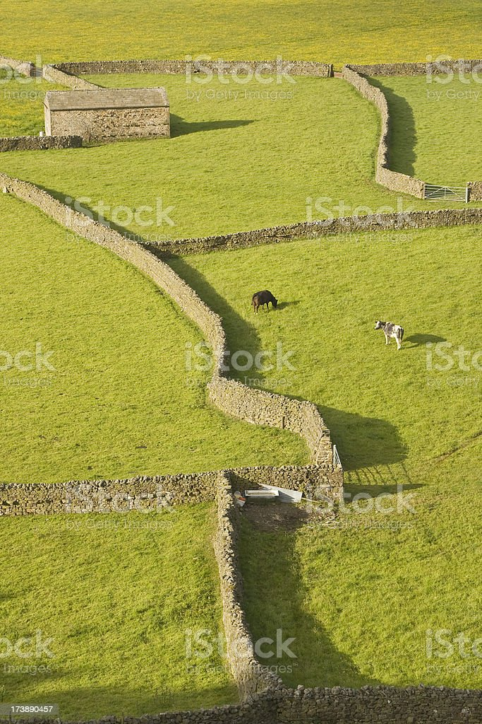 Yorkshire Dales Fields royalty-free stock photo