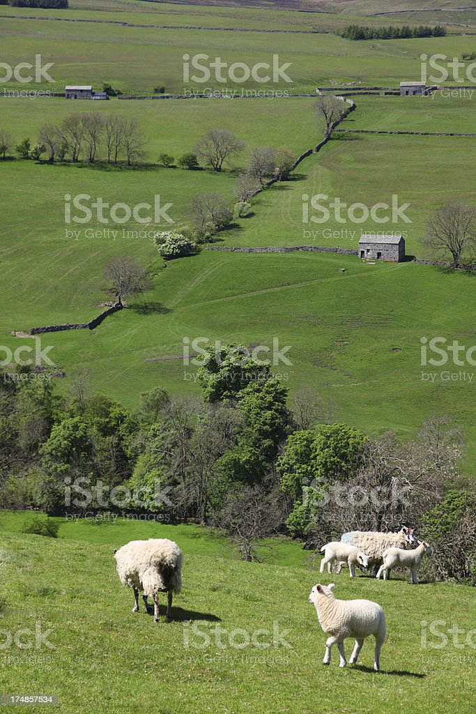 Yorkshire farmland in early spring royalty-free stock photo