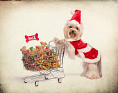 Yorkshire Terrier Dressed up pushing Shopping Cart with Christmas Toys