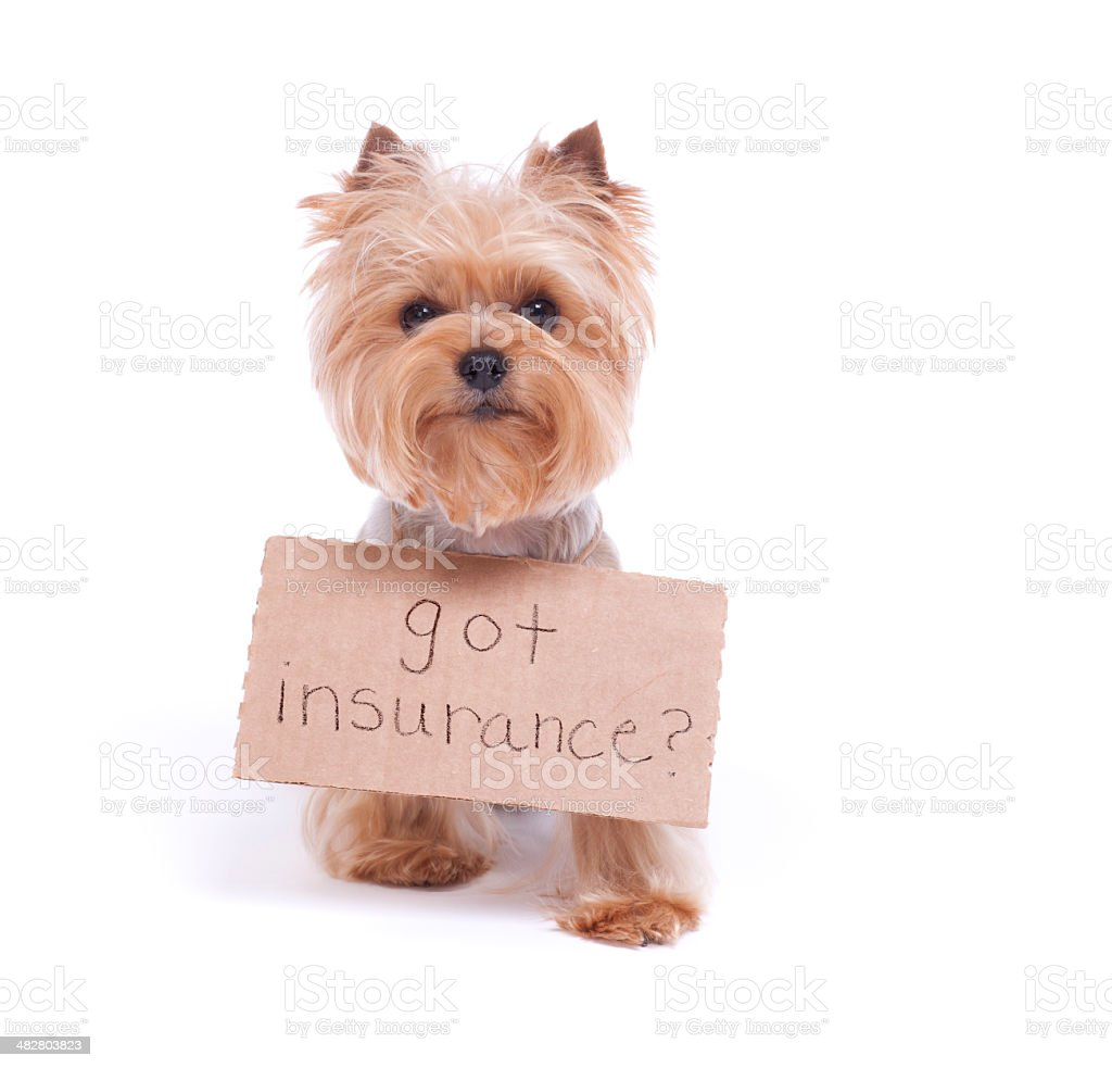 Yorkshire Terrier Holding a Sign stock photo