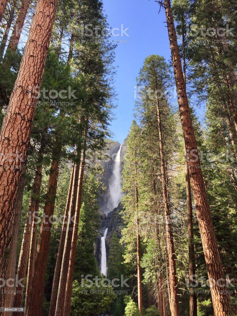 Yosemite Waterfalls behind Sequoias in Yosemite National Park,California, vertical stock photo