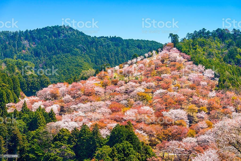 Yoshinoyama, Japan in Spring stock photo