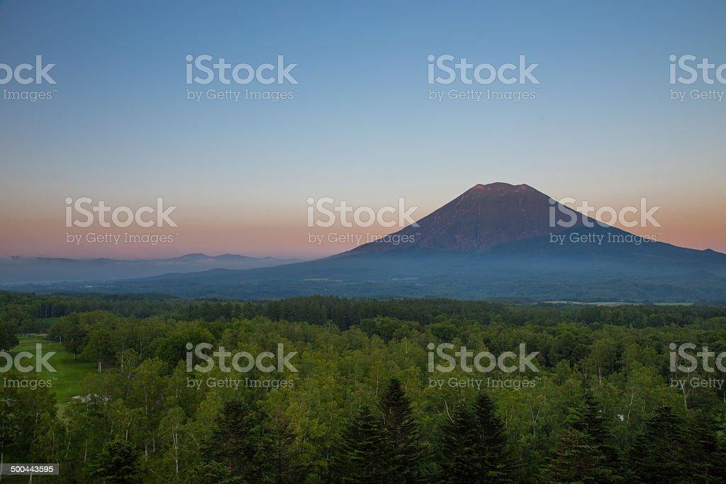 Yote mount stock photo
