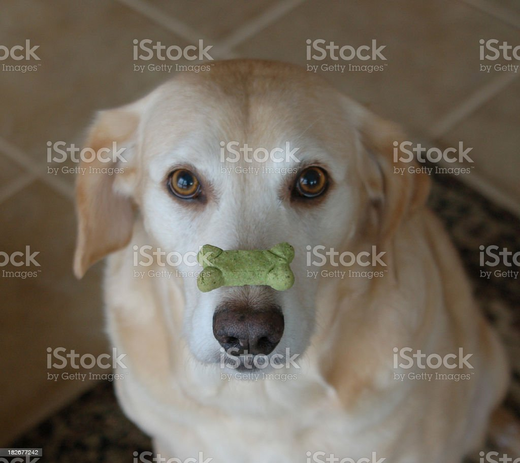 You can't resist me! royalty-free stock photo