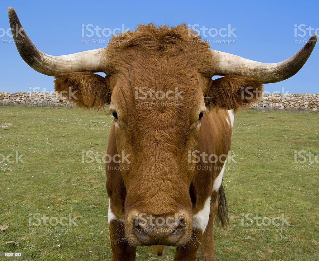 You Looking At Me royalty-free stock photo
