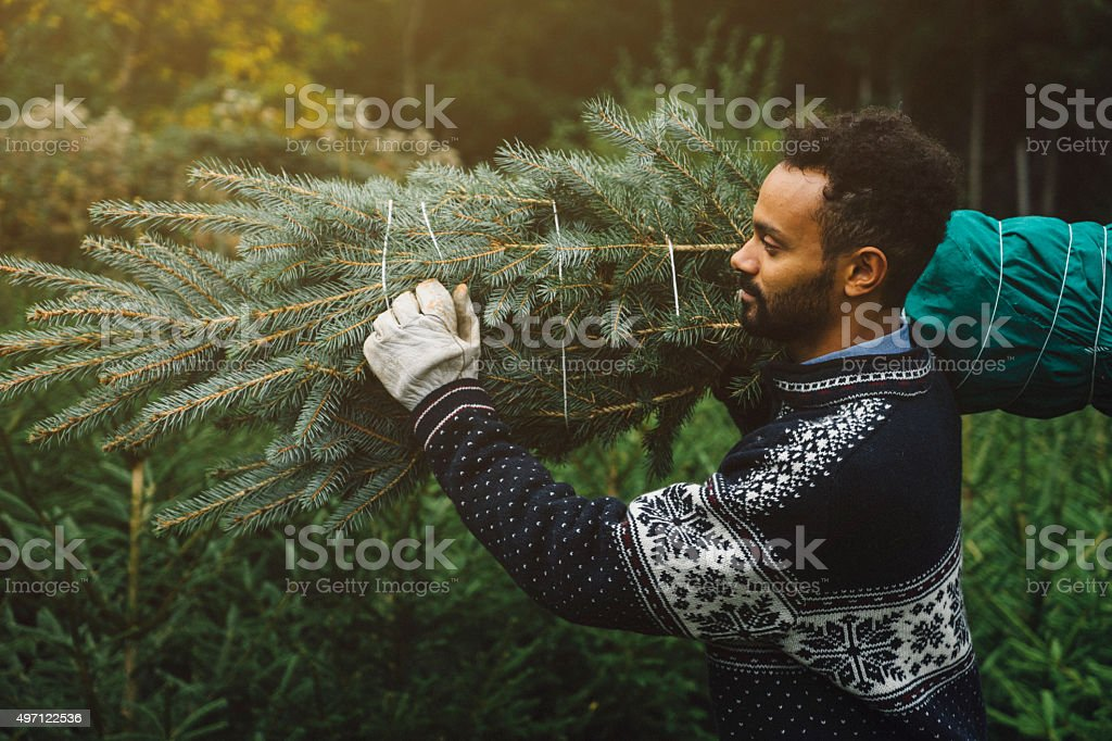 Young adult choosing a pine tree for christmas stock photo