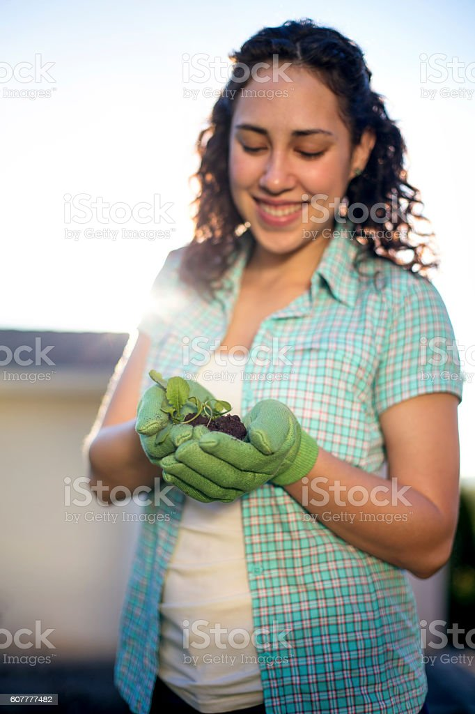 Young adult female gloved hands inspecting a young plant stock photo