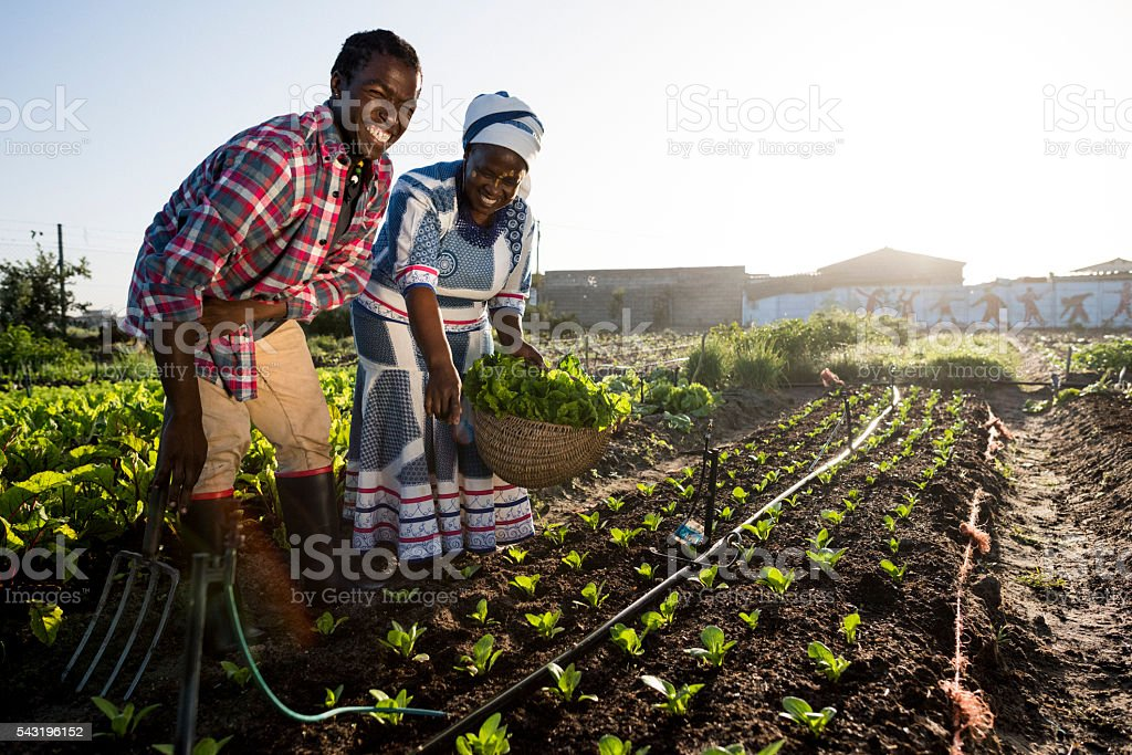 Young African Male and Adult African Woman smiling in garden stock photo