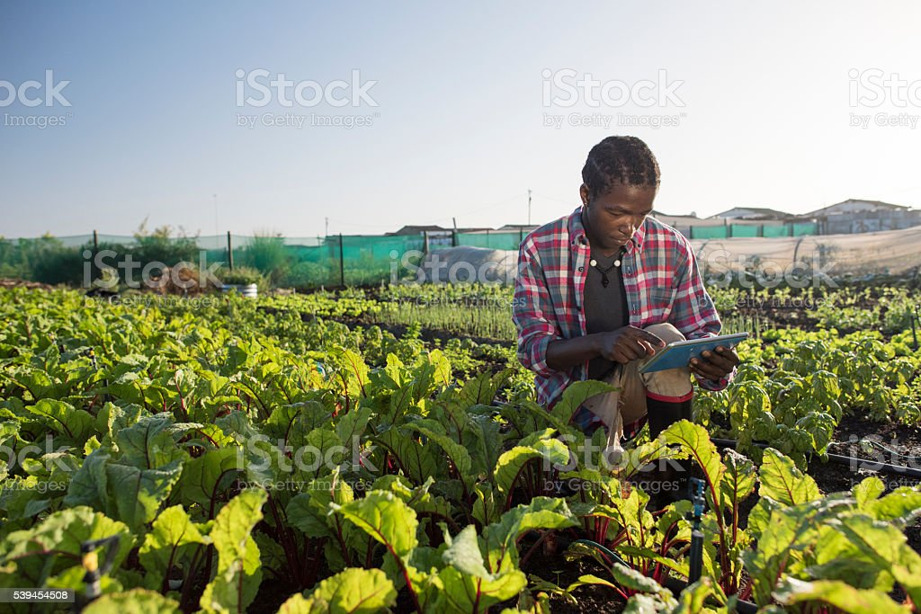Young African male checking his tablet in vegetable garden stock photo
