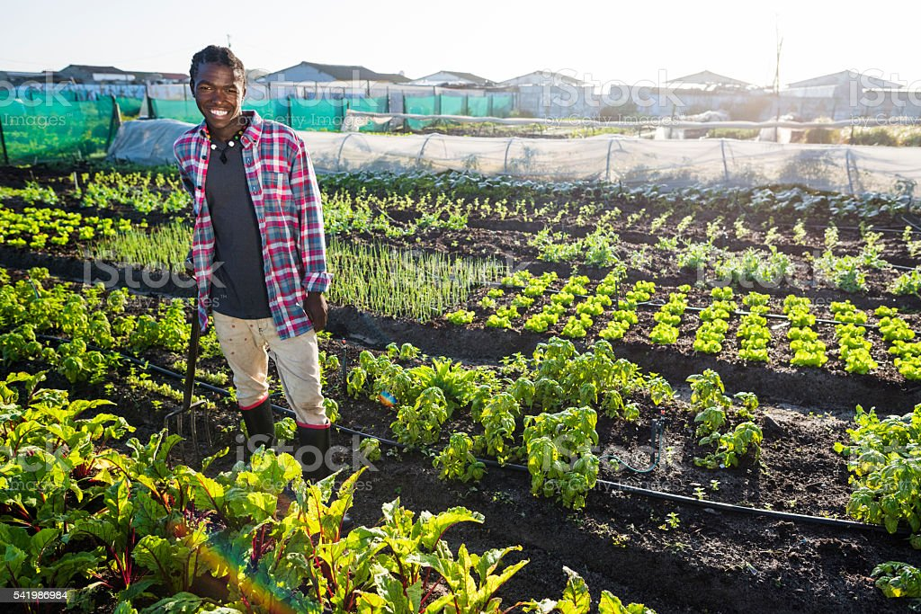 Young African male smiling in his vegetable garden stock photo