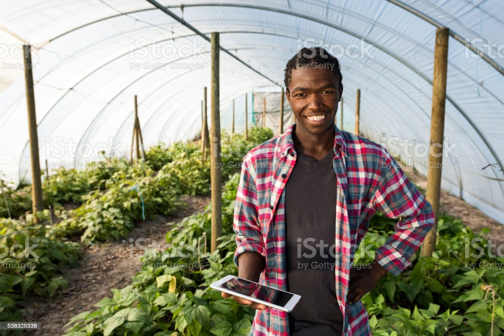 Young African male smiling with tablet in greenhouse stock photo