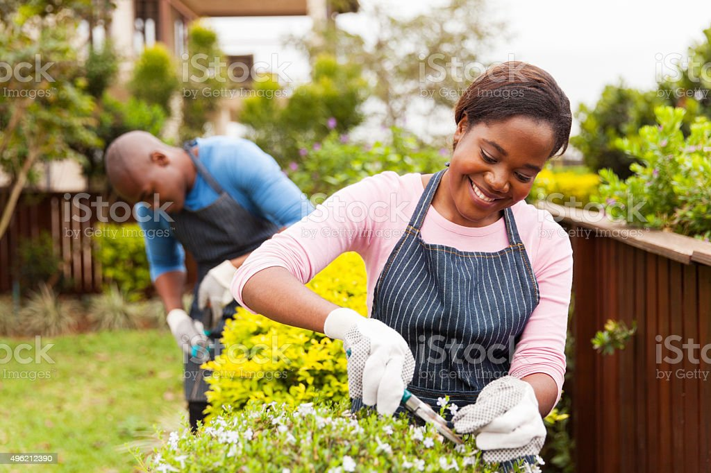 young african woman gardening with her husband stock photo