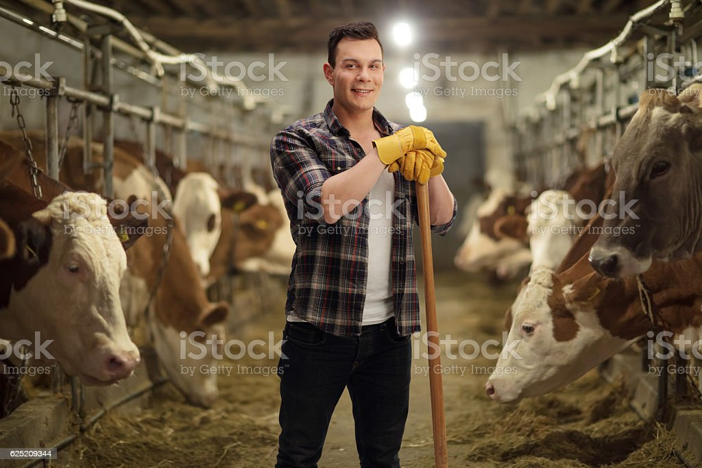 Young agricultural worker posing in a cowshed stock photo