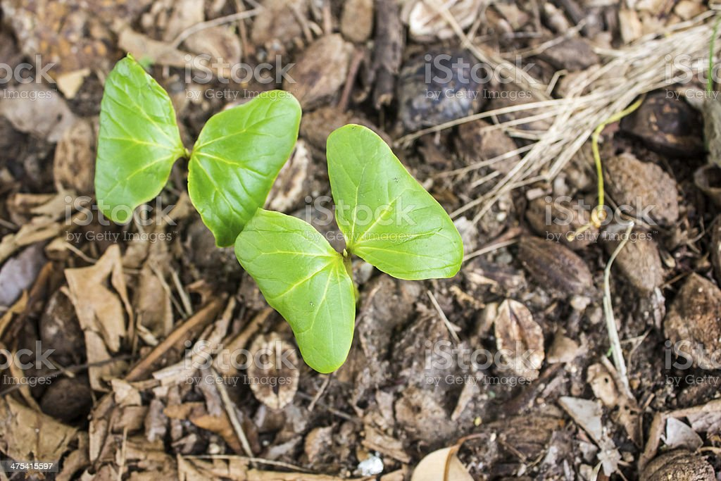 Young almond tree stock photo