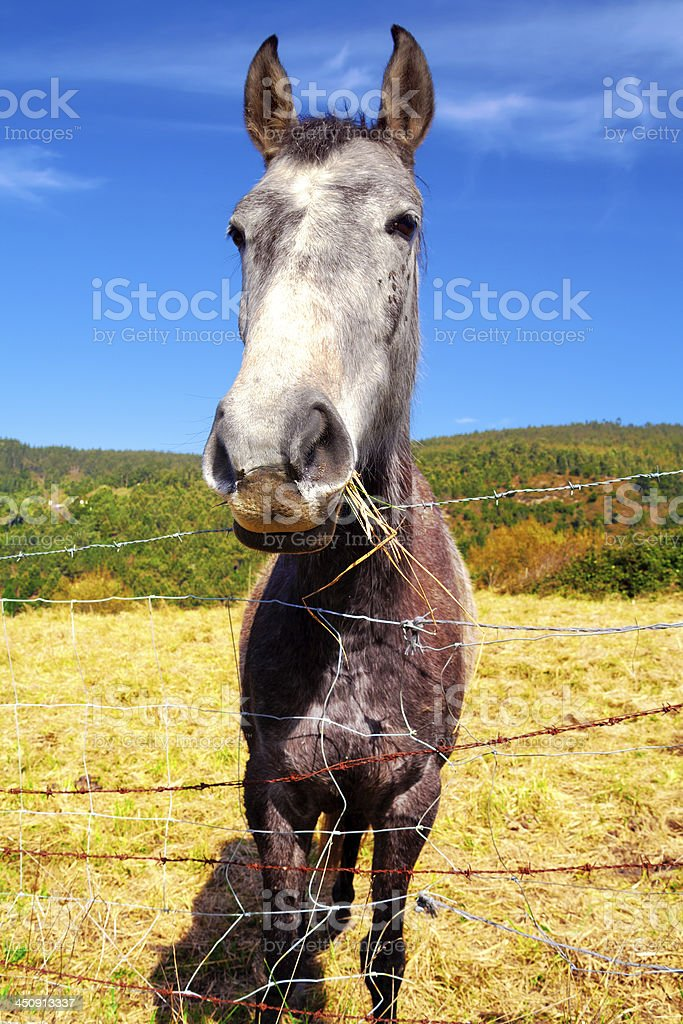 young and funny donkey royalty-free stock photo