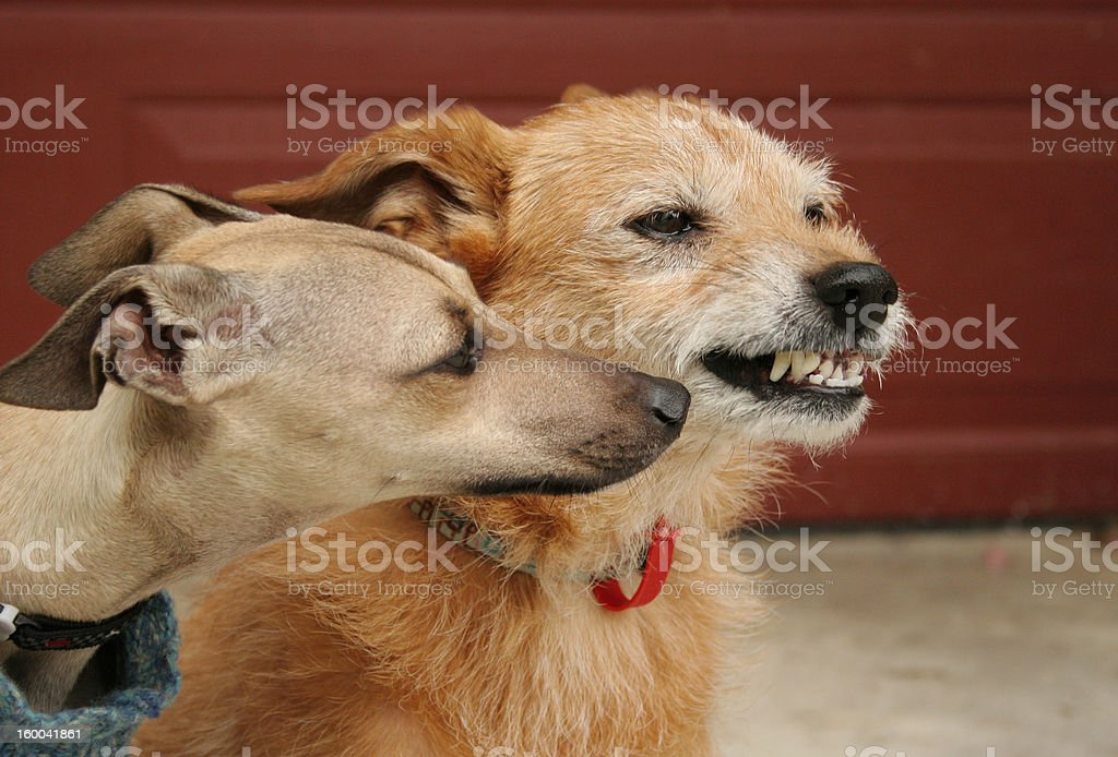 Young and old dogs, canine behaviour stock photo