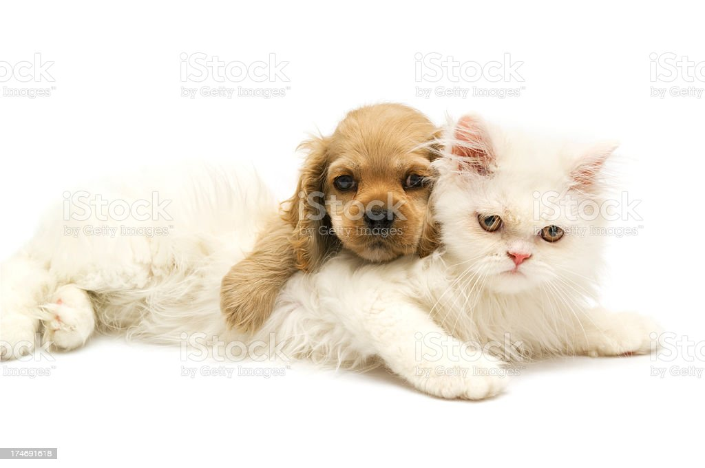 young animals, royalty-free stock photo