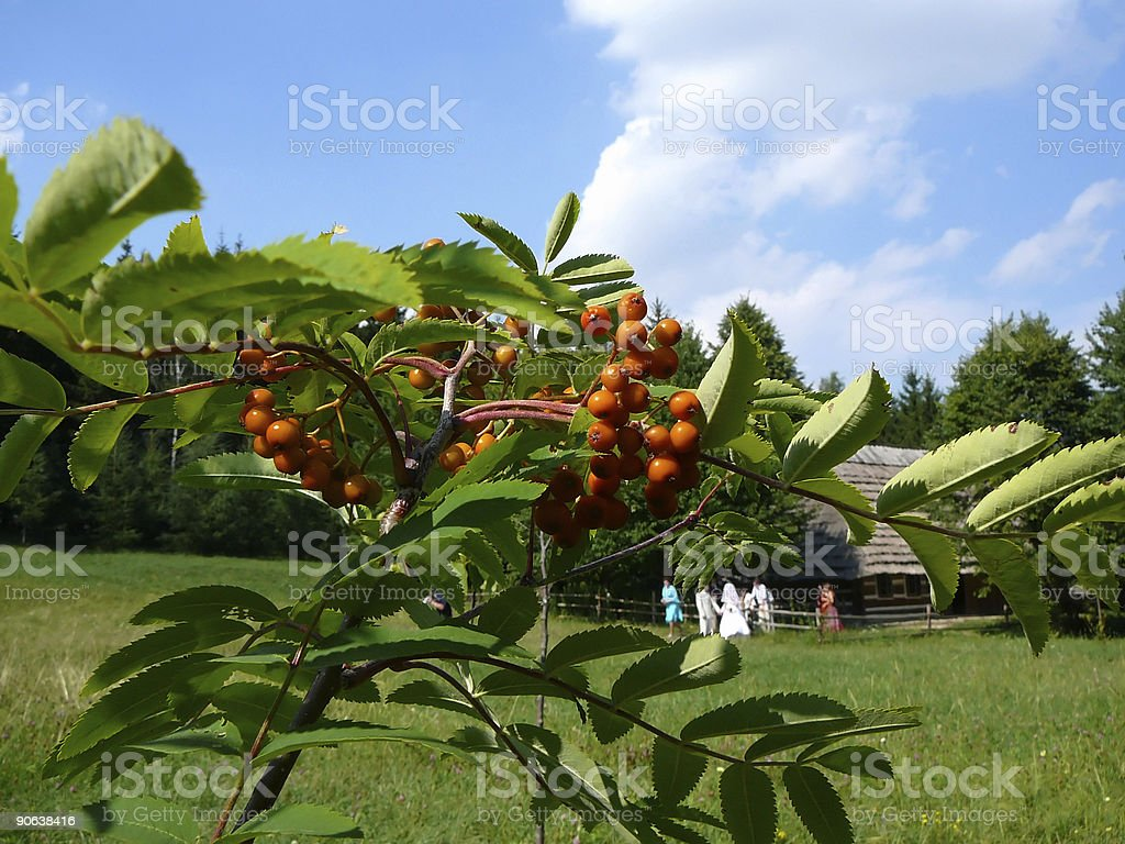 Young ash and newly-married couple royalty-free stock photo